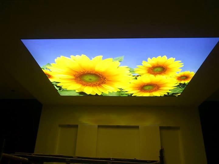 trần in barrisol việt nam với hình hoa hường dương